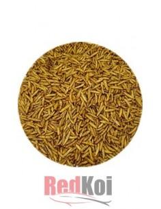 Larvas mosca soldado negro FD